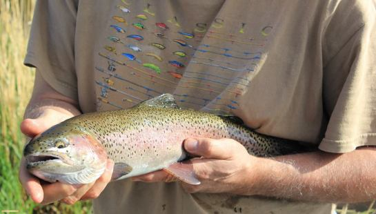 McCoy Creek Redband Trout